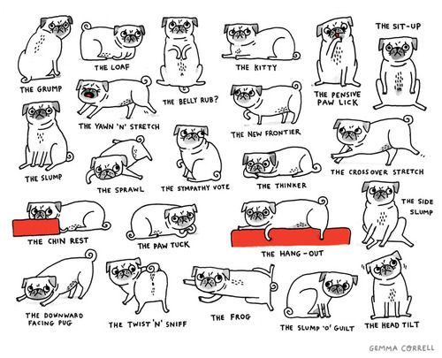 My pug does all of these except for maybe the head tilt (very rare!).  Her favorite poses are the side slump, the frog and the sit-up!