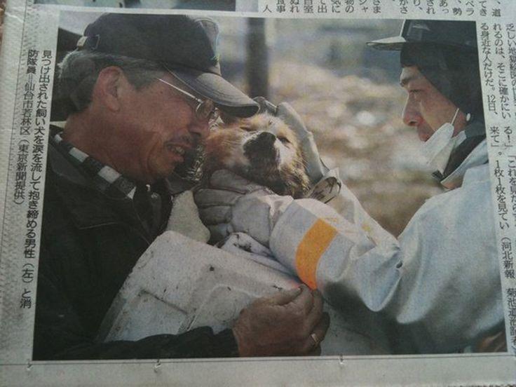 Un chien retrouve son maître après le tsunami au Japon en 2011.