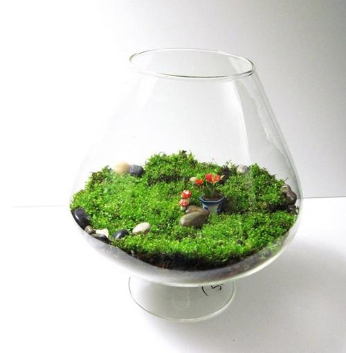 90 Best Images About Aquarium Terrarium On Pinterest Mini Aquarium Cool Fish Tanks And