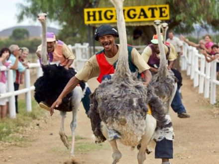 Highgate Ostrich Show Farm Traditional Tour & ostrich riding!!!