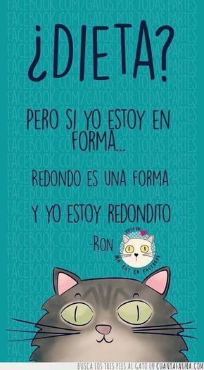 34014 - Las frases de Mr. Cat