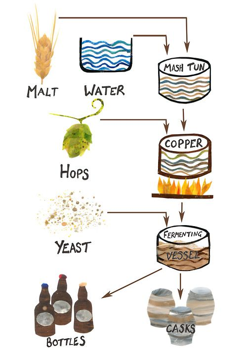 An analysis of the process and ingredients in brewing beer