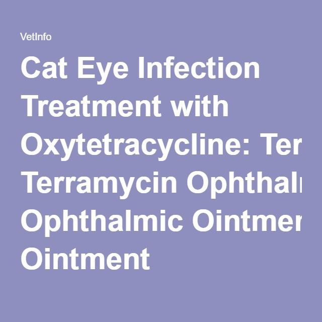 Cat Eye Infection Treatment with Oxytetracycline: Terramycin Ophthalmic Ointment