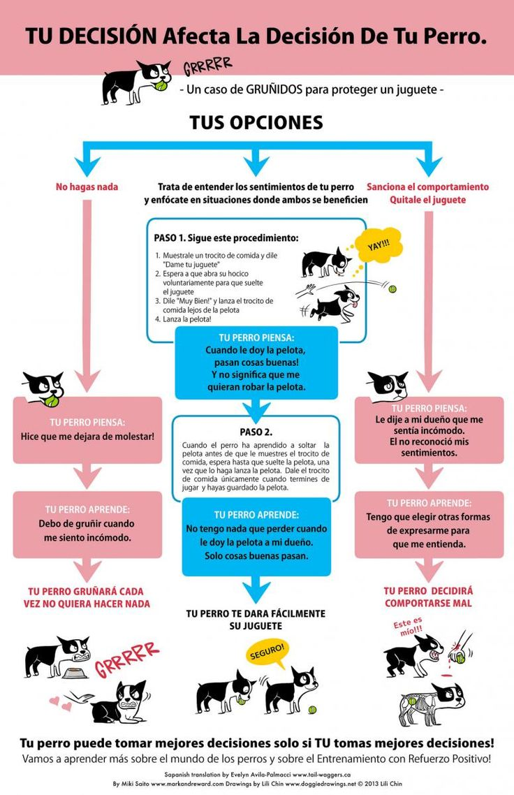 ¿Cómo conseguir que tu perro suelte un juguete? | SrPerro.com, la guía para animales urbanos.