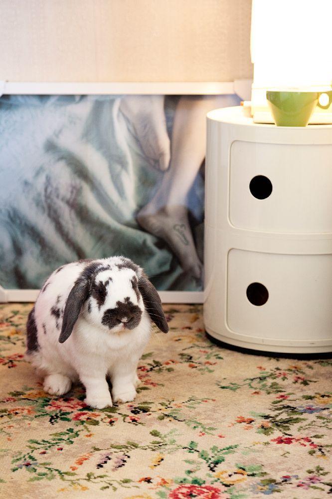 ... au pays des lapins | Photographe : Todd Selby