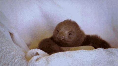 Zootopia Sloth Part Funny Gif #6211 - Funny Sloth Gifs| Funny Gifs| Sloth Gifs