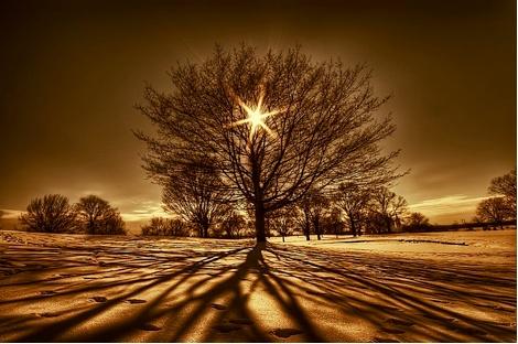 #marron #brown   Clair obscur   #Twilight