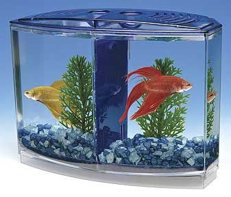 50 Best Images About Fish Tank On Pinterest Wall Mount
