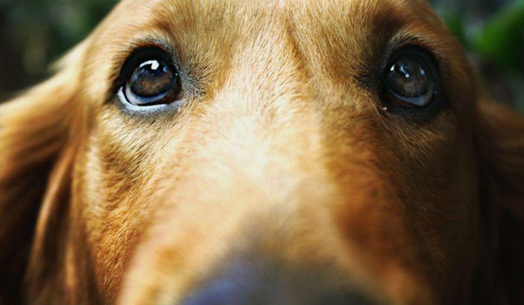 Tu adorable perro evolucionó de este lobo desde hace 33 mil años en el sureste de Asia | Upsocl