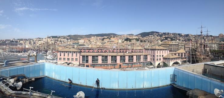 L'Acquario nascosto: visita al dietro le quinte dell'#acquario di #genova. Addestratori alle prese con i #delfini #Liguria #panorama