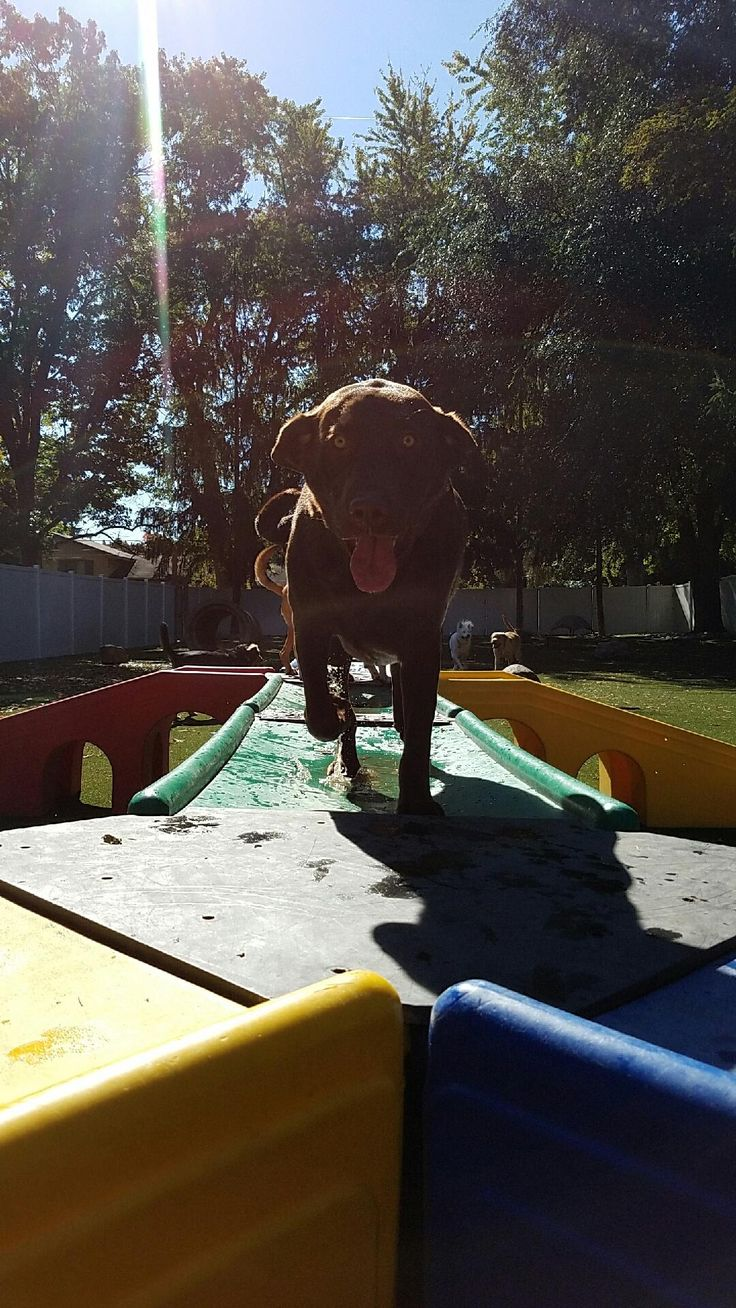 Excited to see you! Pet daycare, Dog daycare, Veterinary