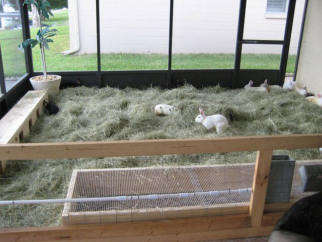 raising rabbits for meat to be rabbit cages and over it