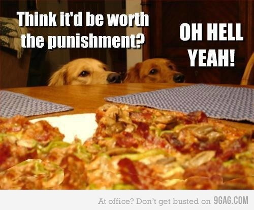 Dog logic. (Have lost much food from the counter due to this logic. ;)