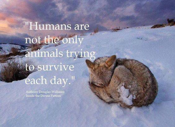 Mercy for Animals.