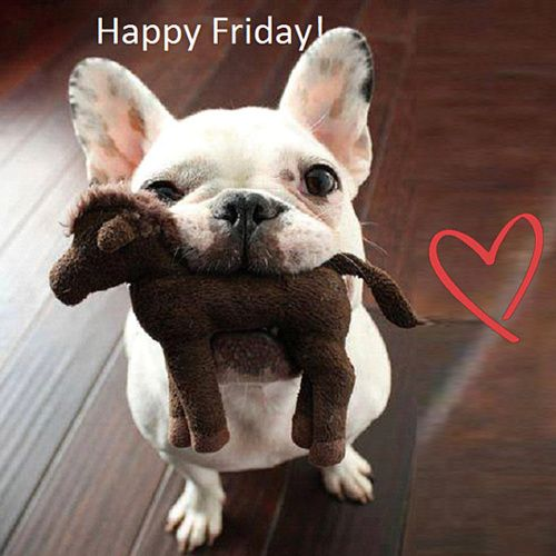 316 best friday dogs images on Pinterest | Funny animal ...