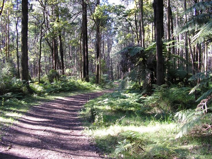 Dandenong Ranges Victoria