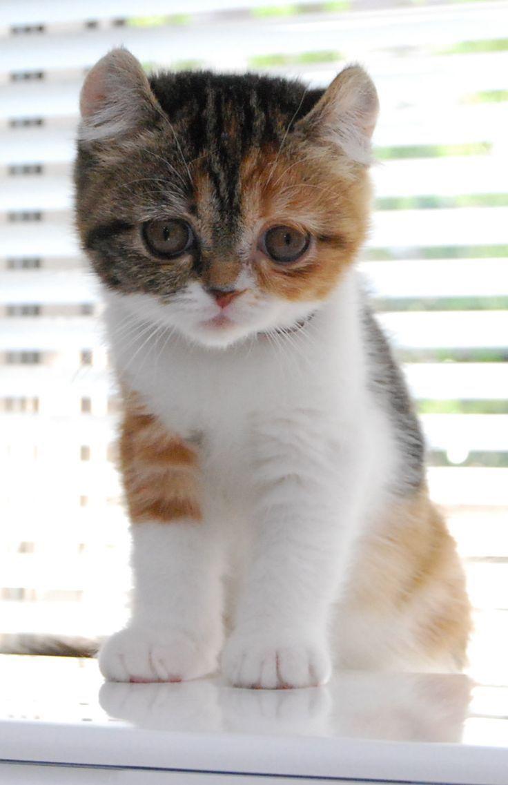 85 best Pets images on Pinterest