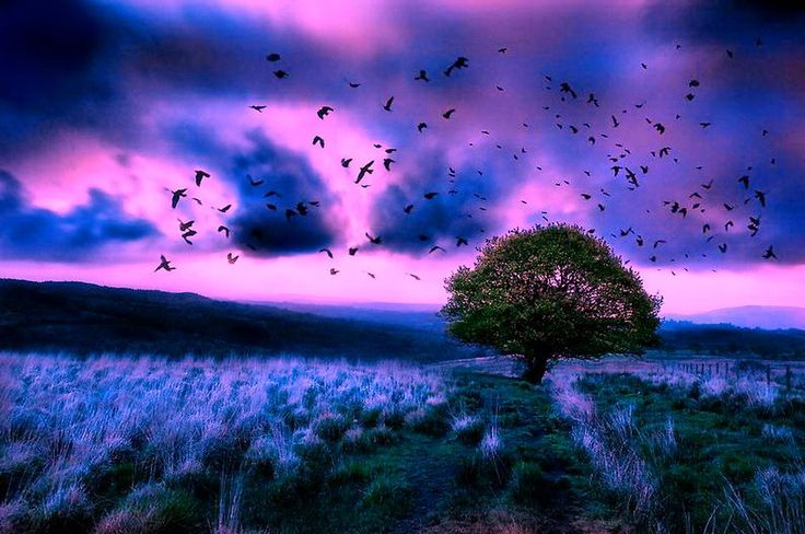 Field Pink Sky Blue Stormy Birds Flight Twilight Clouds Live Wallpaper For Pc