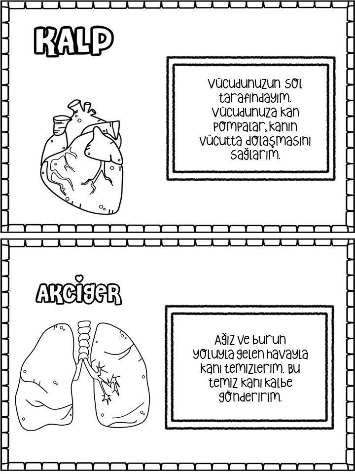 Organlar Evde Egitim Okul Oncesi Yaslar Icin Montessori Yontemi Okuma