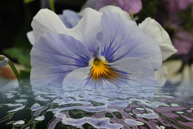 Light blue violet under water