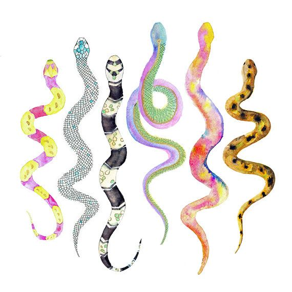 Watercolor Snake Art Watercolors Boy Rooms And The O Jays
