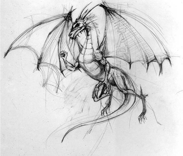 Basic flying dragon outline... although I would want softer