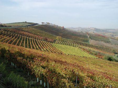 Ruchè di Castagnole Monferrato DOP - FoodInItaly