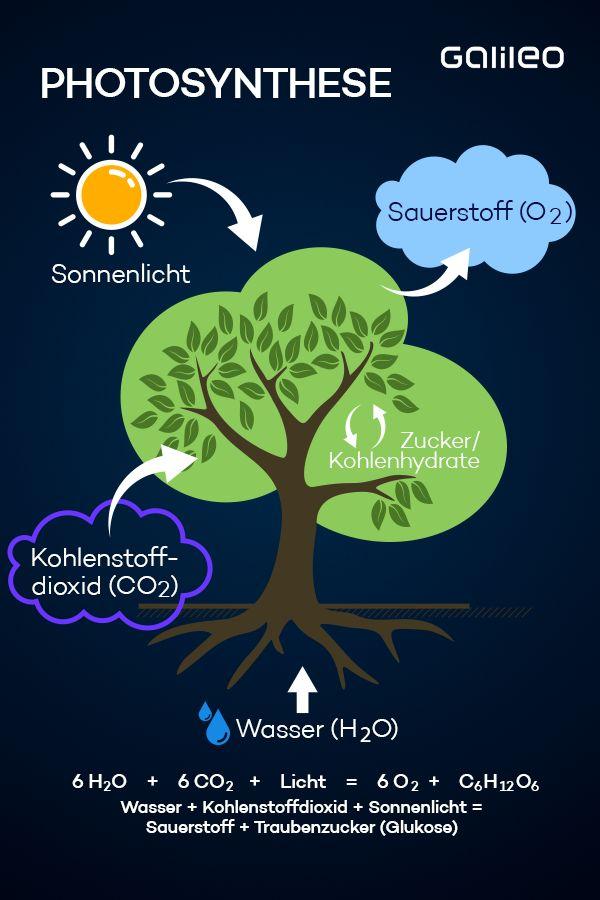 Photosynthese Photosynthese Kohlenstoffdioxid Grune Lunge