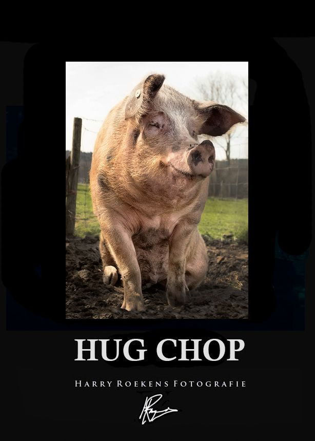 PIG, Print, poster, Photo, art, cute, design, Sharp image, quality, photography, no mass productions, printing center, Harry roekens