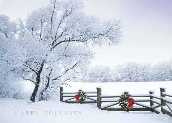 100 best nature scenic cards images on pinterest greeting cards preview image for product titled frosty winter scene holiday greeting cardschristmas m4hsunfo