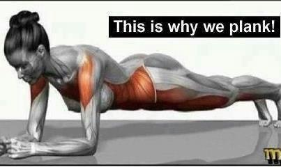 Plank - worst fav exercise! Love this diagram tho. Look at all the muscles you are using in jus 30 secs to 1 min!