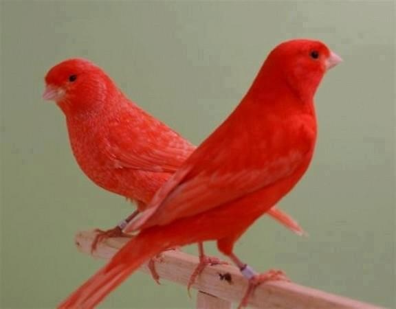 Colorful Birds Picture