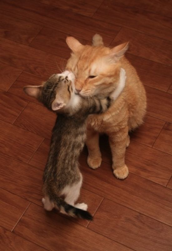 Cute kitten hug