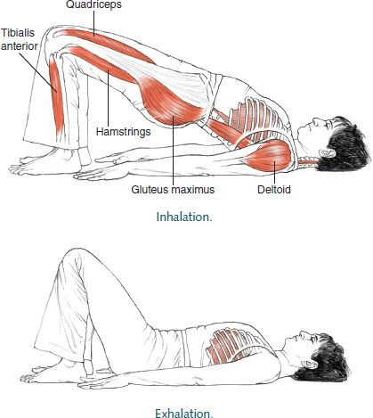 Dwi Pada Pitham Two-Legged Table © Leslie Kaminoff's Yoga Anatomy  B E N E F I T S — Opens the chest and shoulders and brings awarenes...