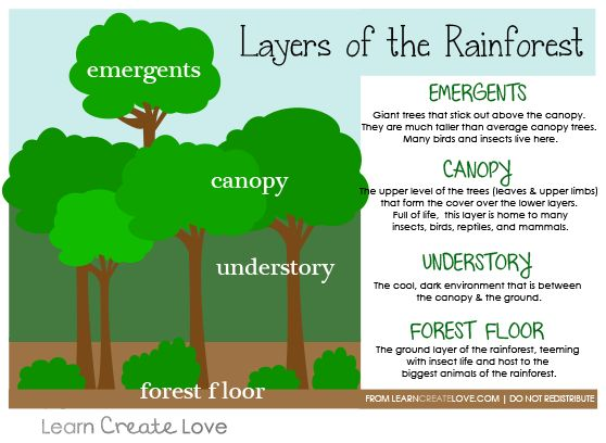 Layers of the Rainforest Printable from http://learncreatelove.com