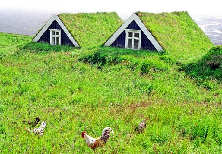 Green roofs.  Iceland.