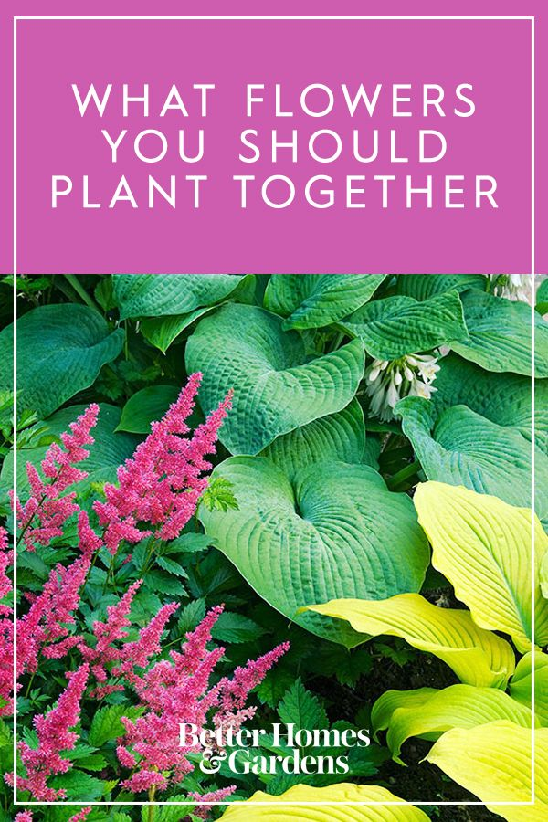 30 Ways To Pair Plants For The Most Beautiful Garden Handy