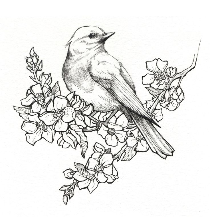 Image From Http//i.imgur.com/ay0NT6X.jpg. | Pen U0026 Ink | Pinterest | Tattoo Bird And Drawings