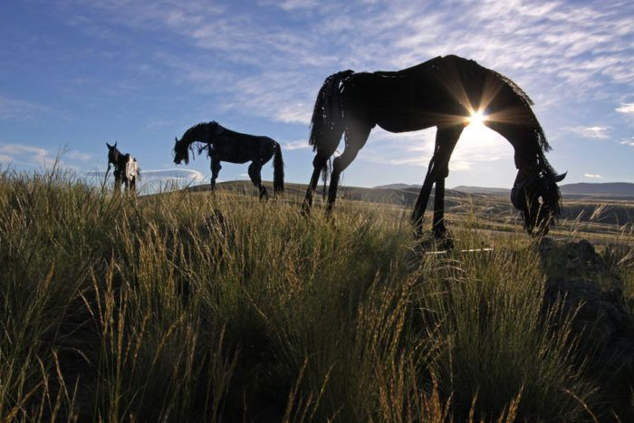 Most People Don't Know The Enchanting Story Behind Montana's Most Famous Horses