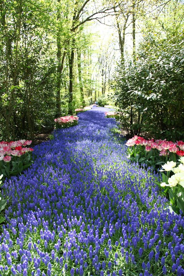 Blue River, Keukenhof, Netherlands