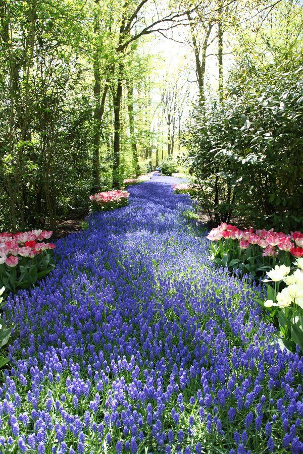 Path: Blue River, Keukenhof, Holland