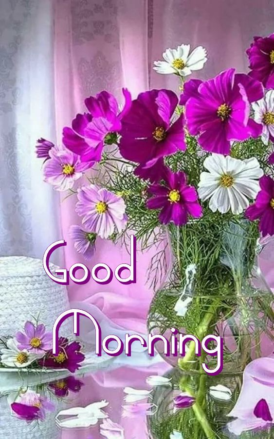 Pin By Clara Maria On Quotes Scriptures Photos Etc Good Morning Flowers Good Morning Greetings Good Morning Cards