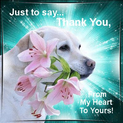 """Say """"Thank You"""" for anything!  Permalink : http://www.123greetings.com/thank_you/everyday/just_to_say.html"""
