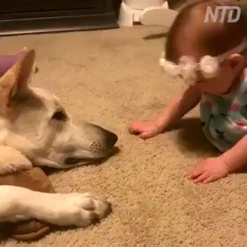 Cão retorna beijos de uma menina    – Смешной юмор