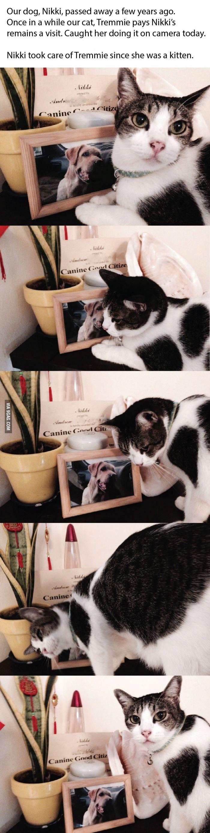 Ungewöhnliche Freundschaften - Katze und Hund......... Sie trauert um ihren Freund und sitzt oft vor seinem Bild und schmust damit, sie vermisst ihren Freund........