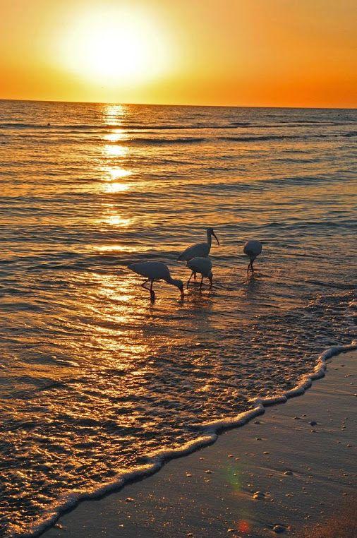 Остров Санибел  #красота #пейзаж #природа #photography #nature #amazing #new #pictures #beautiful #naturek #landscape #beauty #остров