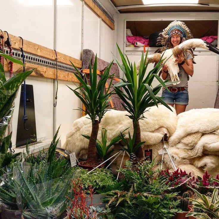 We hebben weer geweldig inkopen gedaan vandaag. Van grote xxl longhorn schedels, lekker fris groene planten en stapels schapenvachten.