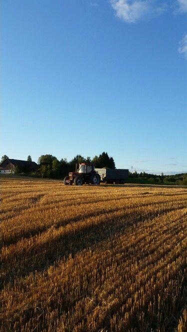 Perfect harvest weather