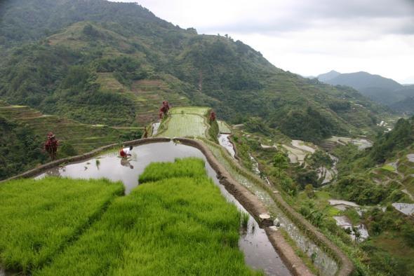 Banaue Rice Terraces, Philippines: Philippines Image, Beautiful Destinationsand, Rice Me, Cute Ideas, Beautiful Places, Rice Terraces, Philippines Travel, Popular Pin, Dreams Destinations