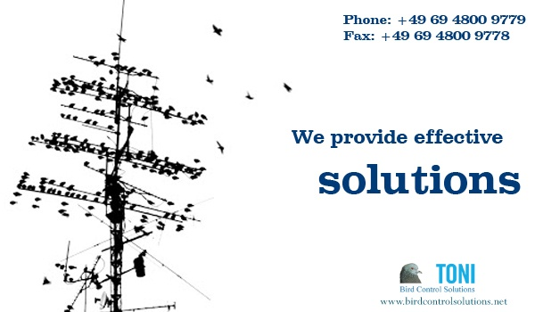 We at birdcontrolsolutions.net provides effective bird control methods to prevent your building, building to be damaged from birds.